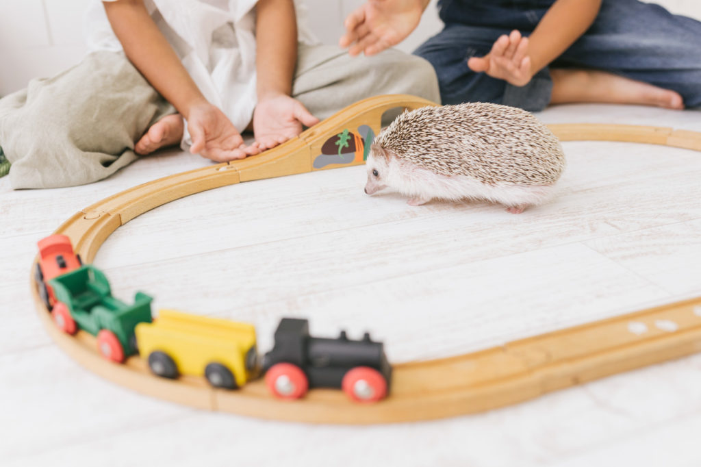 hedgehog and toy train
