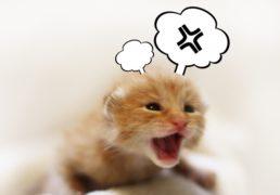カンカンに怒っているようにイラストが記入された仔猫の写真