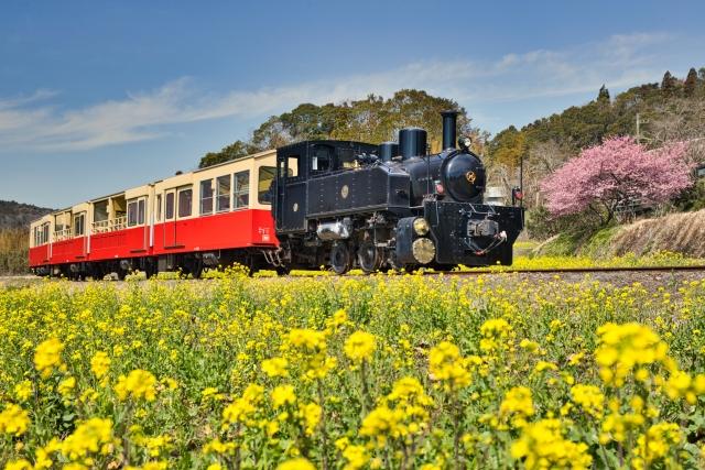 菜の花と汽車