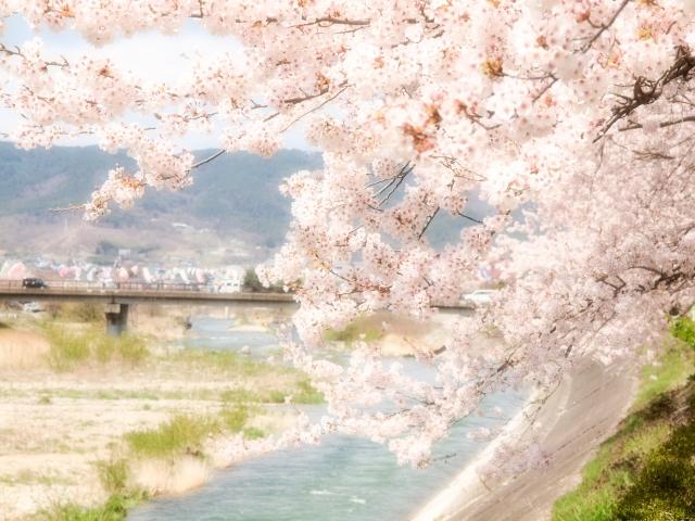 桜吹雪と春のイメージ写真