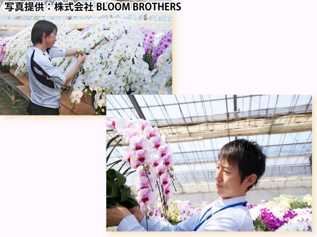 胡蝶蘭生産者の写真
