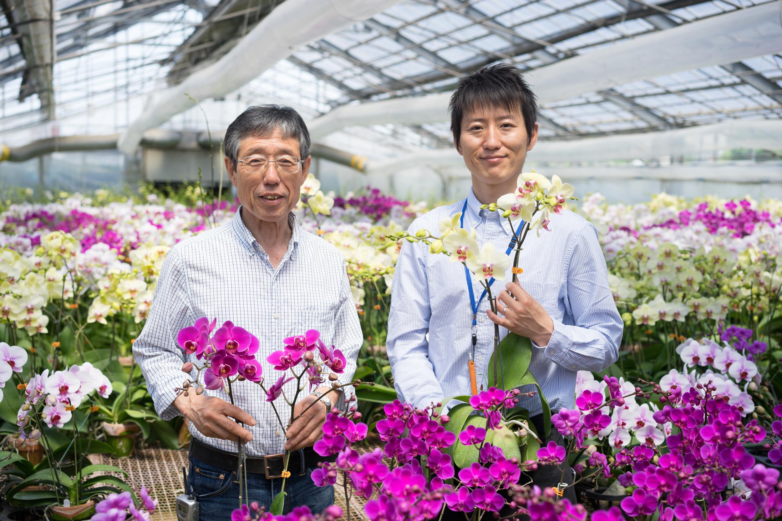 胡蝶蘭生産現場の風景